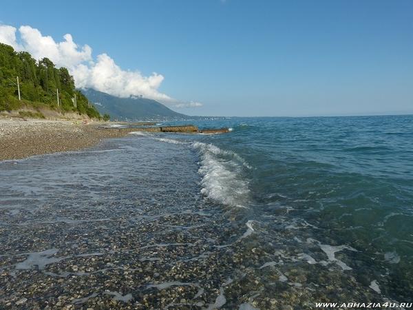 Абхазия,  Гребешок (частный сектор,  без посредников) 3