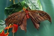 Высоко рентабельный  бизнес ферма Живых Тропических Бабочек  из Коста Рикки
