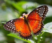 Высоко рентабельный  бизнес ферма Живых Восхитительных Бабочек  из Южной Америки